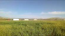 ارض 4489 م في الرمثا للبيع قابل لتفاوض... بقرب من طرة شجرة عمراوة بويضة حوارة