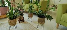 Lovely plant pots for sale