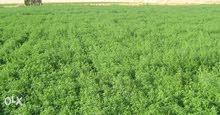 للبيع 80 فدان أرض زراعية بالداخلة محافظة الوادي الجديد