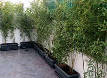 Les plantes naturelles