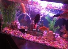حوض سمك شامل بالسمك الزينة