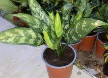 نباتات داخلية indoor plants