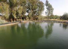 مزرعة استثمارية مميزة للبيع في ام الرصاص مع بئر ماء ارتوازي