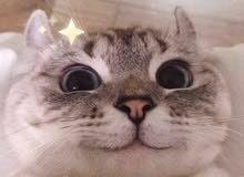 مطلوب قطه للتبني