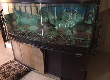 حوض سمك للبيع بسعر 90 ريال