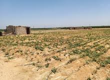 ارض زراعية ه فدان  بالخطاطبة للايجار