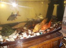 حوض و 11 سمكة مختلفة للبيع aquarium and 11 fish