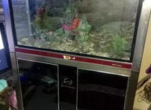 حوض سمك ديجتل