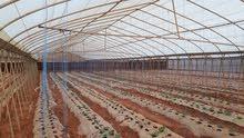 مشروع زراعي للاستثمار في السودان