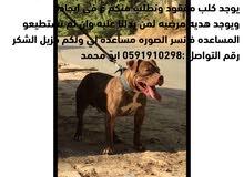 كلب مفقود جائزه لمن يدل عليه او يجده