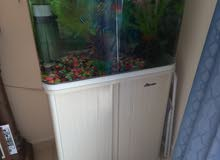 fish tank with two fish