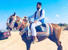 حصان 3\4اشقر