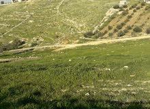 قطعة ارض بالسرو 1200 م -طريق السلط