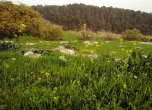 ارض مميزة حوض 6 الدبة البحاث ابو السوس