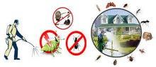 مكافحة حشرات و قوارض بالضمان لكافة المحافظات