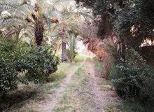 لدينا مزارع دوانم من نصف دونم الى 6 دونم في بغداد