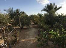 (هذا العقار بمصر )مزرعة 10فدان للبيع مزروعة بالكامل