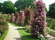 خدمات الحدائق واشجار الزينة اغمات