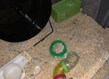 hamster cage and accessories only