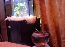for sale aquarium with any kind of fishes with baby guppy also