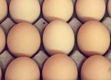 بيض لاحم مخصب 90/ للفقاسات