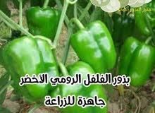 بذور خضروات وورقيات سريعة النمو سهلة الزراعة بالمنزل