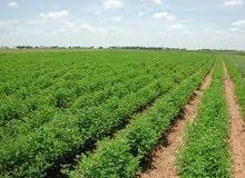 ارض زراعيه خصبه للبيع