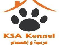 مركز العناية بالكلاب KSA Kennel اسعار مغرية بمتناول الجميع