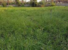 ارض زراعية ( خضراء ) موقع ممتاز