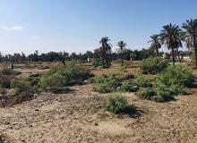 قطع اراضي للبيع في ابو الخصيب الحوطه المساحه 1100 متر