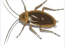 تنظيف الفلل مكافحه الحشرات والقوارض