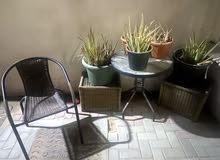 aloe Vera big and small plants and table and chair set