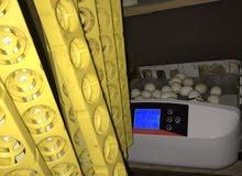 فقاسه 56 بيضه للبدل على دجاج زينه