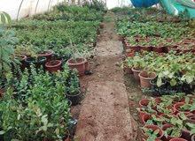 مشتل انتاج و بيع أشتال و نباتات زينة و فواكه للبيع