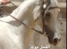 حصان جميل جدا