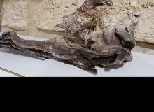 طير من خشب الصنوبر