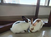 cute bunnies for sale