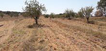 ارض زراعية بمنطقة غنيمة 2 هكتار ارض مشاء الله مساوية