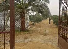 (هذا العقار بمصر )مزرعة 5فدان أمام فيلا وزير الري