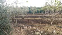 أرض للبيع 125 هكتار بكازبلانكا
