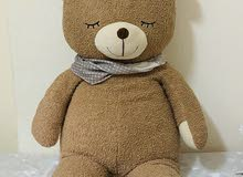 Big size cuddle Bear for kids