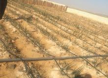 قطعة ارض زراعية بمحافظة الفيوم للبيع 50 فدان سعر الفدان 40000ج