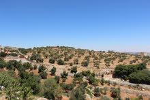 ارض 34 دونم في سوف للبيع تصلح لمزارع كبيرة