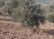 ارض من اراضي غرب جرش خمسه دونم ومأتان متر تبعد عن عمان 48ك