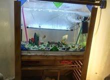 حوض أسماك للبيع