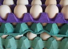 بيض مخصب وصوص قولد للبيع