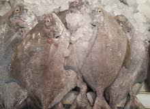 استيراد و تصدير الروبيان والسمك طازج