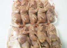 يوجد لدي طيور سمان تذبح حسب الطلب الحبه ب 400 بيسه