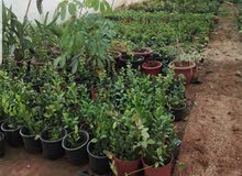 مطلوب عامل مصري  لمشتل  إنتاج نباتي