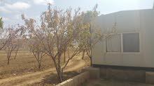 مزرعه مساحه 179 لبنه مخطط.شارع عشرين  في صنعاء للمعاينه ت 772189228
